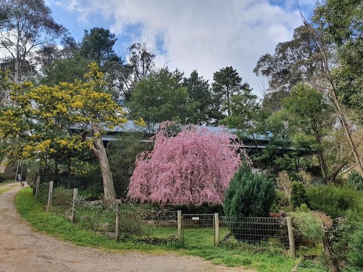 Katoomba Private Bush Retreat No.3