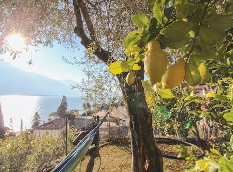 UlivoLimone Apartment - Profumo d'estate sul lago