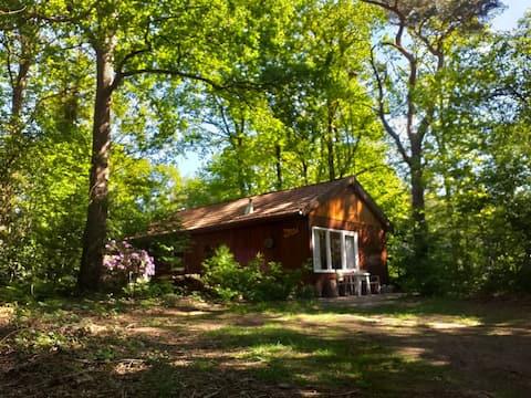 Basic nature cottage near Beerze (Ov)
