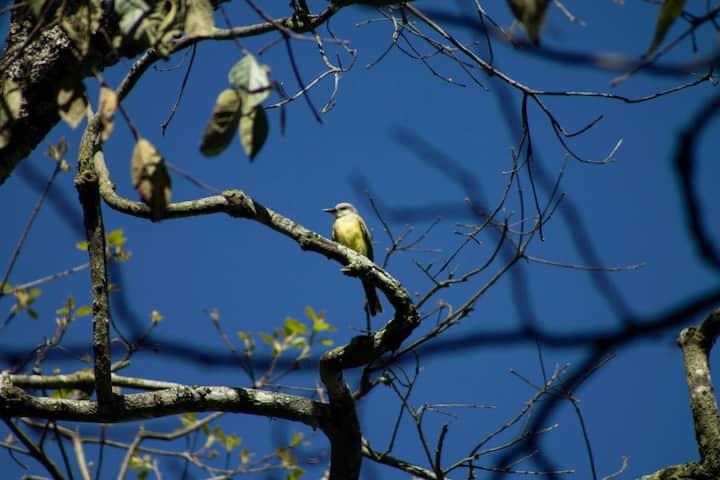 """""""Aire puro y maravilloso canto de pájaros"""""""