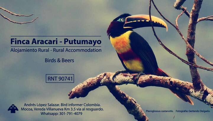 Finca Aracari-Rural accommodation, birds & beers!