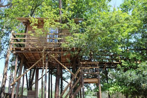 Tree House Alameda