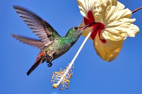 Caribbean R & R (Relax, Bird watching, Wild Life)