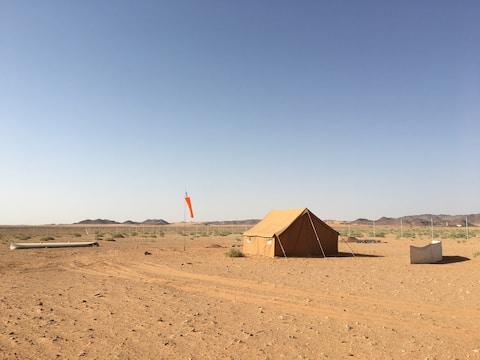 الغابة الصحراوية Desert Jungle