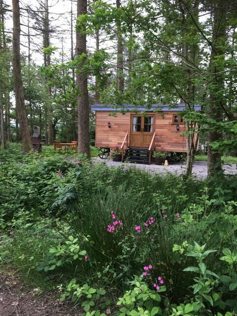 Luxury Shepherds Hut in peaceful woodland.