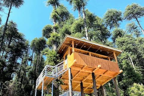 Malt Hibiki Duplex Tree House,HimalayanView Shimla