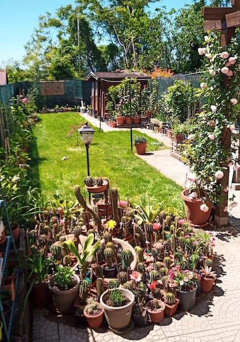 Le piante di casa SaMar