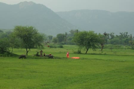 Country house in private estate, Sariska Rajasthan