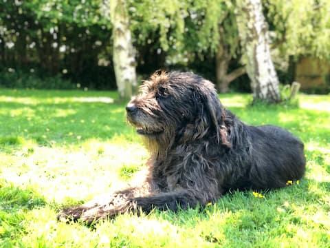 Hounds Pause - Dog Friendly North Devon