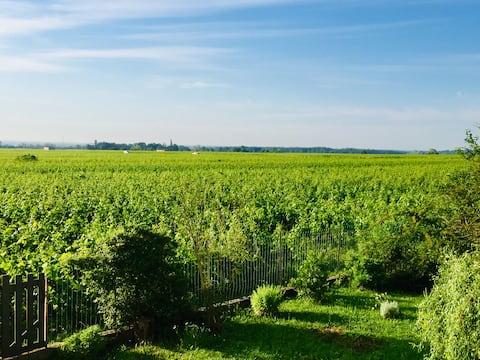 Appartement avec vue sur les vignes à Gevrey