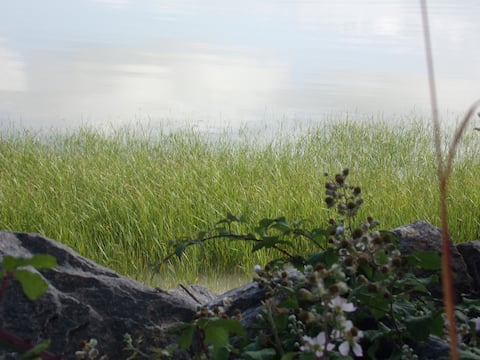 A la découverte de l'estuaire de la Loire (CH-2)