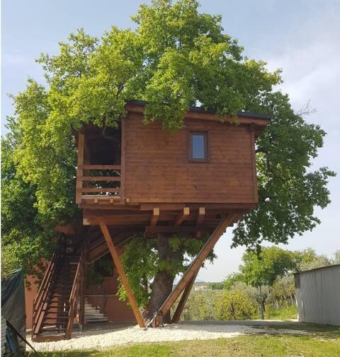 Casa sull' Albero  Treehouse Costa dei Trabocchi