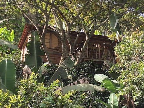 Cabaña del Rio Lejos en Pijao,descanso y bienestar