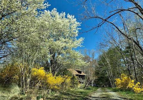 Sue's Wee Cottage in Pinnacle