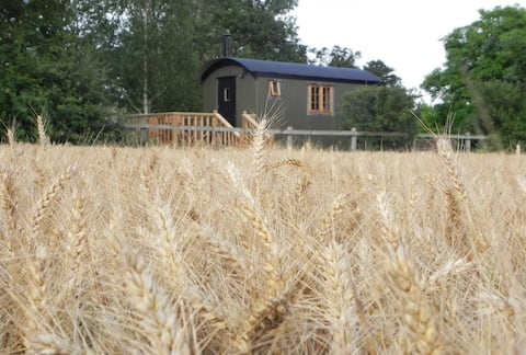 Cosy Shepherds Hut in peaceful rural location.