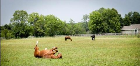 My Horse Farm Dream
