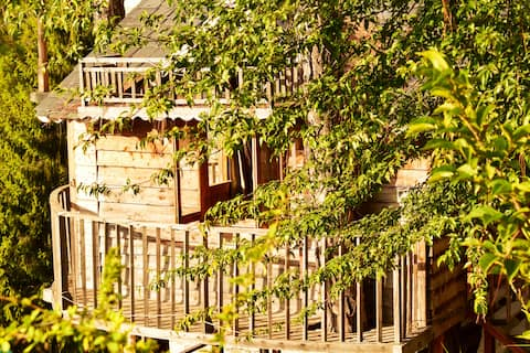A Dreamy Treehouse In Dalhousie| 150 Meter Trek