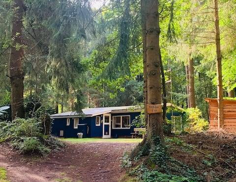 Vakantiehuisje in het bos met veel privacy