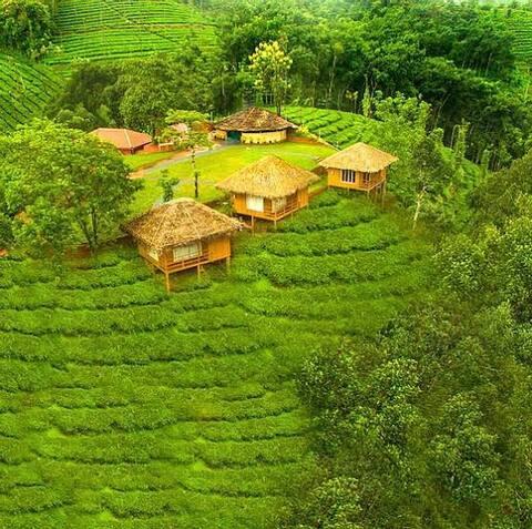 Tea Estate Villa W/ Amazing view of Periya forest