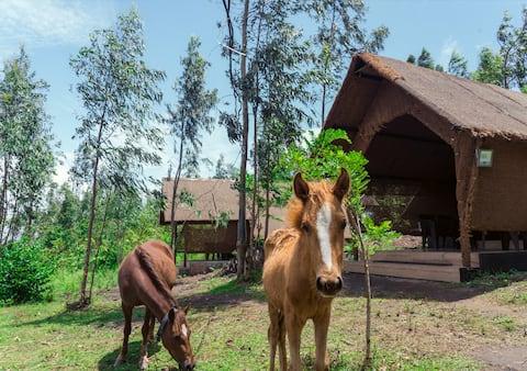 Amazing Hill View Cave Resort with Pool- Attappadi