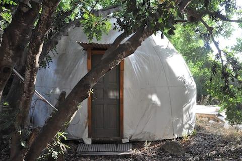 Friedliches Kuppelhaus mit Blick auf einen natürlichen Wald
