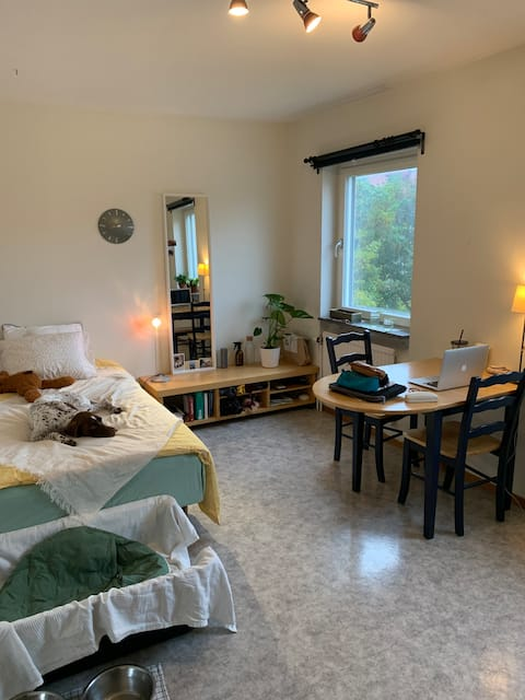 Studio apartment very well located