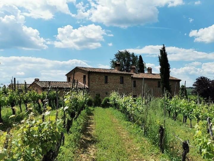 Rural Tuscany | Farm with pool and vine yard