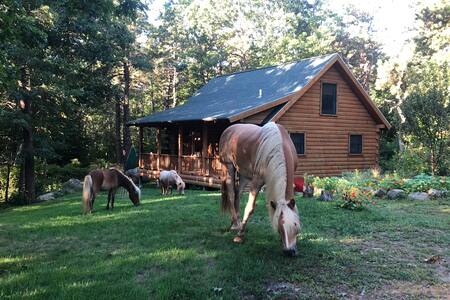 The Dogtown Cabin at Applecart Farm