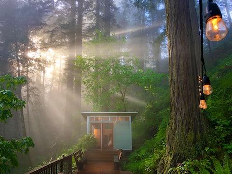 Романтическая студия в красном лесу Калифорнии.