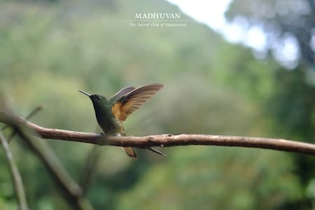 Welcome to Madhuvan, the Sacred Gem of Guanacaste.