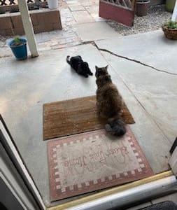 My two kitty babies playing on the patio - direct access from yard - no steps