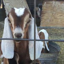 Yogi Goats