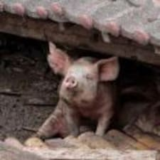 臭猪 User Profile