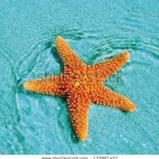 Användarprofil för Sea Star Condos