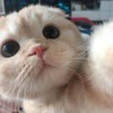 郑猫猫的小鱼干