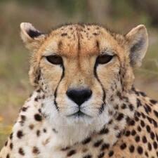 Ouadie felhasználói profilja