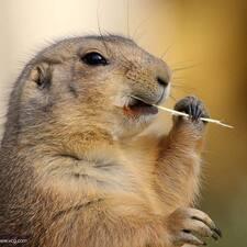土拨鼠 User Profile