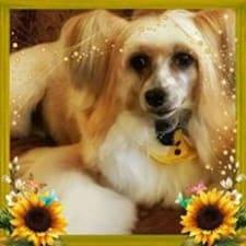 Bobbi User Profile