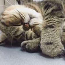 โพรไฟล์ผู้ใช้ Cat