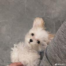 林兮 felhasználói profilja