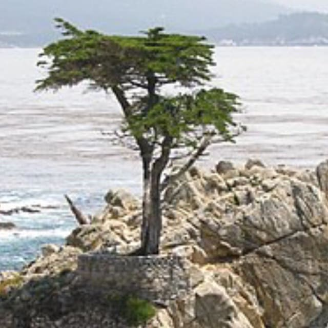 Guidebook for Pebble Beach