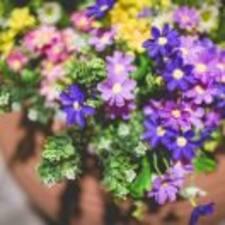 Nutzerprofil von 紫兰