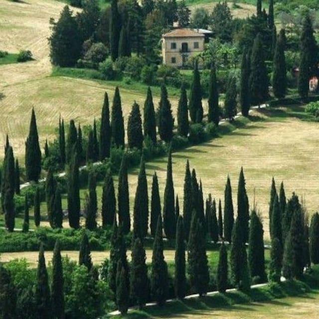 Guidebook for Orvieto