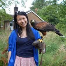 Ying Lan User Profile