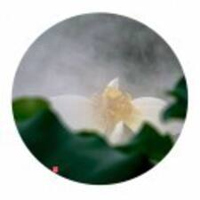 Profil utilisateur de 阳桃