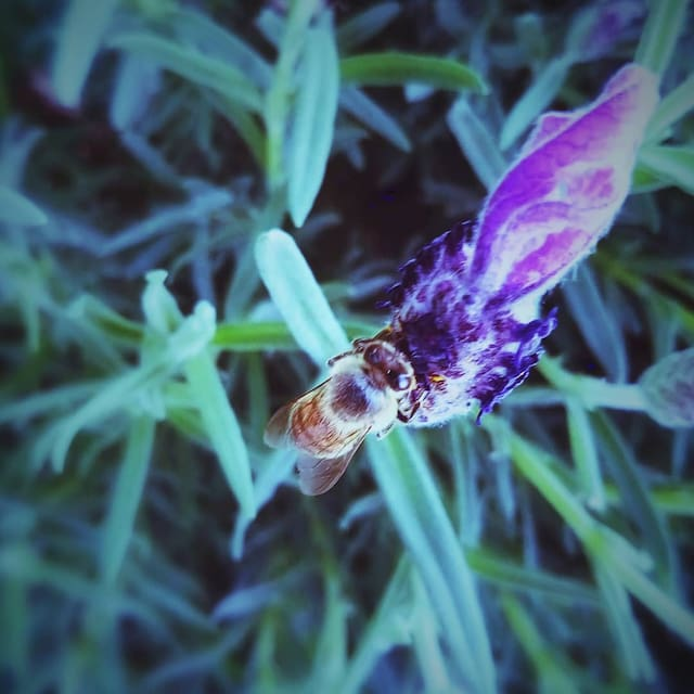 Guidebook for Vivonne Bay
