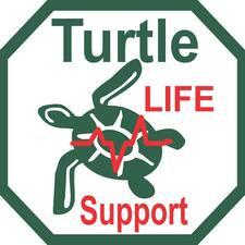Perfil de usuario de Turtle