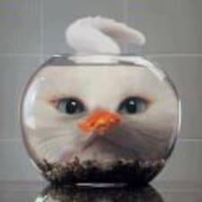 Perfil de usuario de 猫不吃鱼