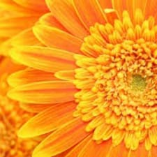 Bright & Cheery Living User Profile
