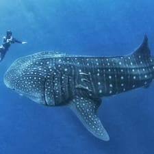 Whale Shark User Profile